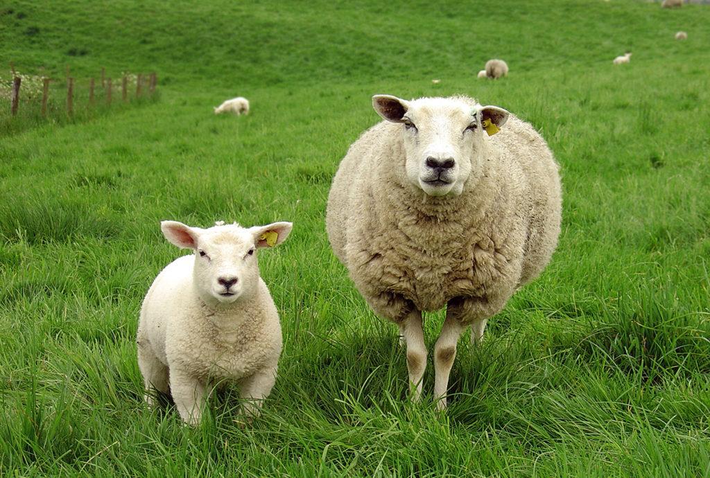 Není wool jako wool